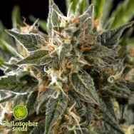 Philosopher Seeds Sleepy Yoda AUTO