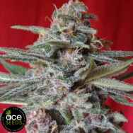 Ace Seeds Snow Moon