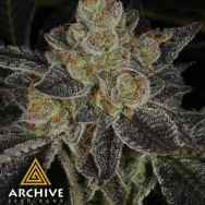 Archive Seeds Dosidos #22 F2