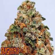 Big Head Seeds Dogstar Dawg