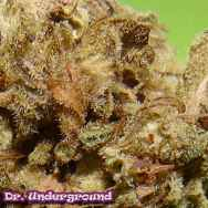 Dr. Underground Seeds Dark Cookie