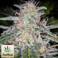 FastBuds Seeds Blue Dream'matic