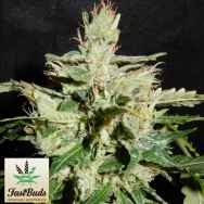 FastBuds Seeds CBD Crack