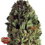 Heavyweight Seeds Budzilla