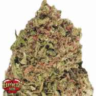 Heavyweight Seeds Dream Machine