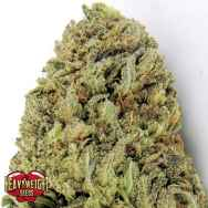 Heavyweight Seeds Fast & Vast AUTO
