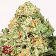 Heavyweight Seeds Fruit Punch