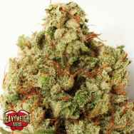 Heavyweight Seeds Green Ninja