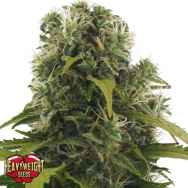 Heavyweight Seeds High Density AUTO