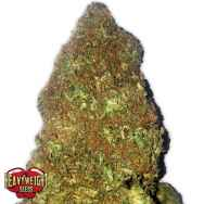 Heavyweight Seeds Jackpot AUTO