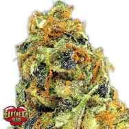 Heavyweight Seeds K.O. Kush