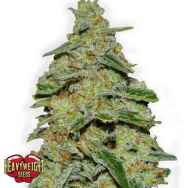 Heavyweight Seeds Lemon Cake