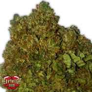 Heavyweight Seeds Money Bush
