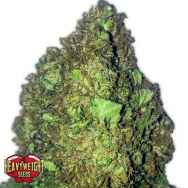 Heavyweight Seeds Short and Sweet AUTO