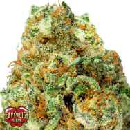 Heavyweight Seeds Turbo Bud AUTO
