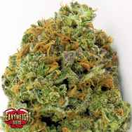 Heavyweight Seeds Wipeout Express AUTO