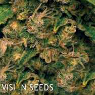 Vision Seeds Vision Critical AUTO