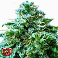 Heavyweight Seeds Superb O.G.