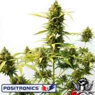 Positronics Seeds Critical Express