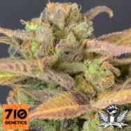 710 Genetics Seeds High Priority Auto