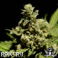 Rokerij Seeds Cheese
