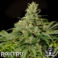 Rokerij Seeds Skunk NL
