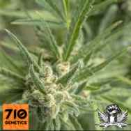 710 Genetics Seeds Shell Shock AKA Amensia Haze
