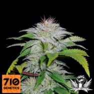 710 Genetics Seeds White Candy Auto