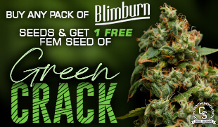 Blimburn Seeds Promotion at The Choice Seed Bank
