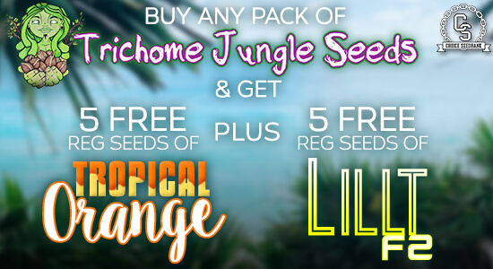 Trichome Jungle Seeds Promotion at The Choice Seed Bank