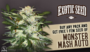 Exotic Seed Promotion at The Choice Seed Bank