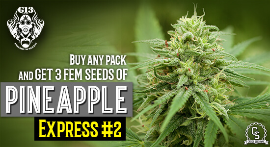 G13 Labs Promotion at The Choice Seed Bank