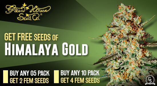 Green House Seed Co. Promotion at The Choice Seed Bank