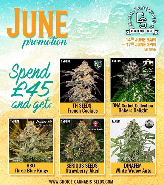 The Choice Seedbank Newsletter - Super Summer Seeds and Freebies!