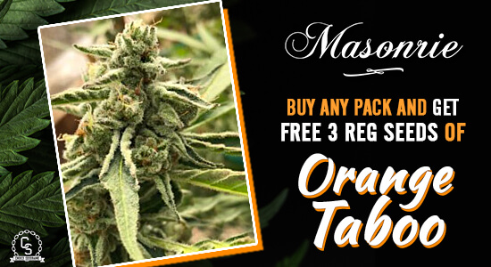 Masonrie Seeds Promotion at The Choice Seed Bank