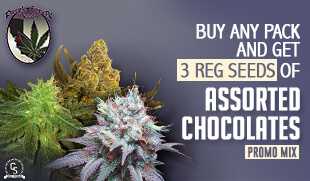 Purple Caper Seeds Promotion at The Choice Seed Bank