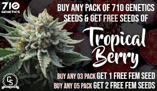 710 Genetics Seeds Promotion at The Choice Seed Bank