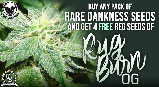 Rare Dankness Seeds Promotion at The Choice Seed Bank
