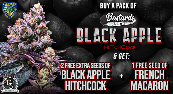 T.H. Seeds Promotion at The Choice Seed Bank
